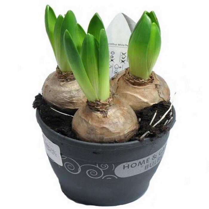 Луковичные цветы купить интернет магазин, недорогие букеты